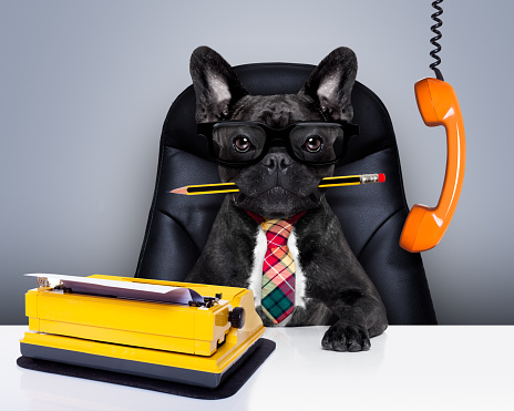 Business Lessons From A Dog